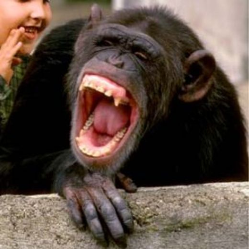 Hysterical Laughter Images Gallery Funny Laughing Animals
