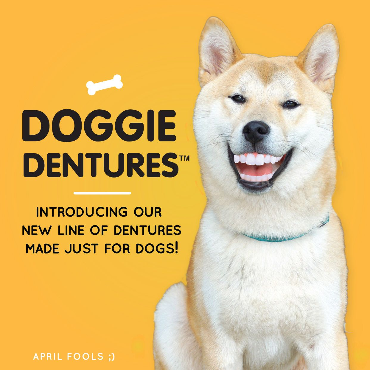 now offering dentures for dog make your dog s smile the envy of all