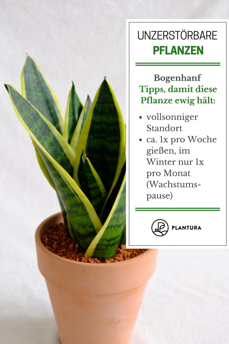 Die 10 kaum zu tötenden Pflanzen #patioplants