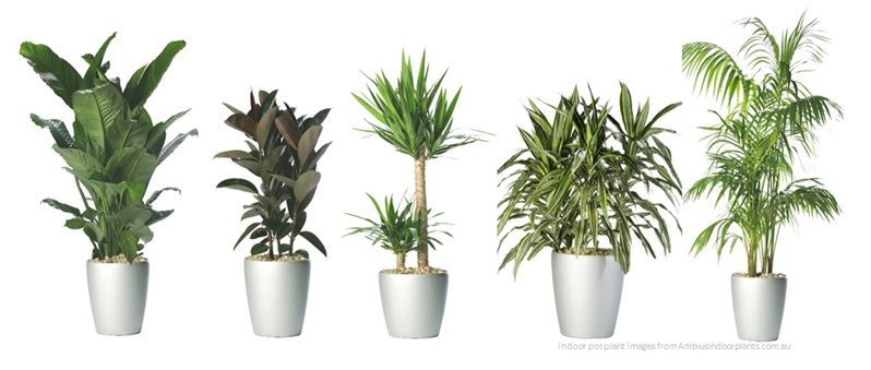 Indoor plants google search home pinterest indoor for Good plants to have indoors