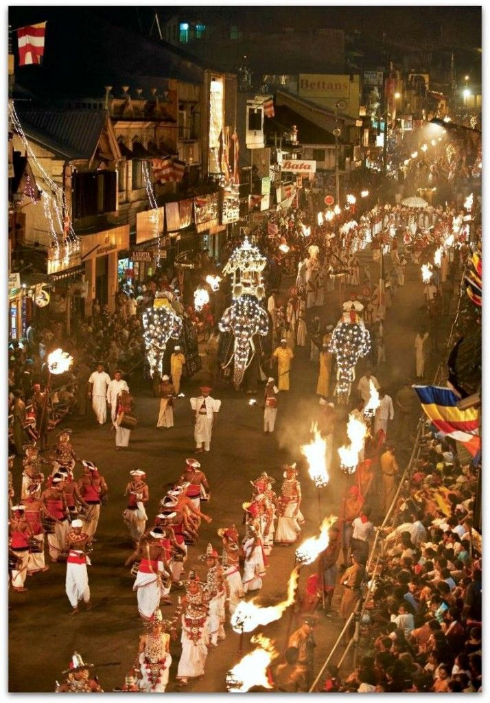 Sri Lanka's Sacred Esala Perahera Festival   Sri lankan elephant ...