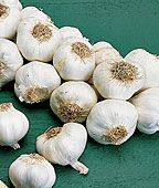 Garlic, Extra Select - time to plant!