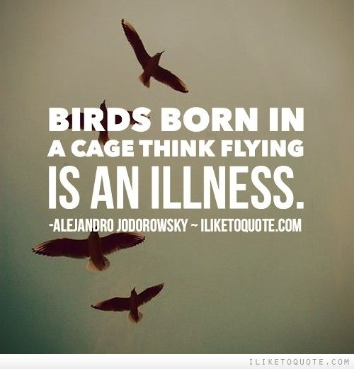 Quotes About Flying: Birds Born In A Cage Think Flying Is An Illness.
