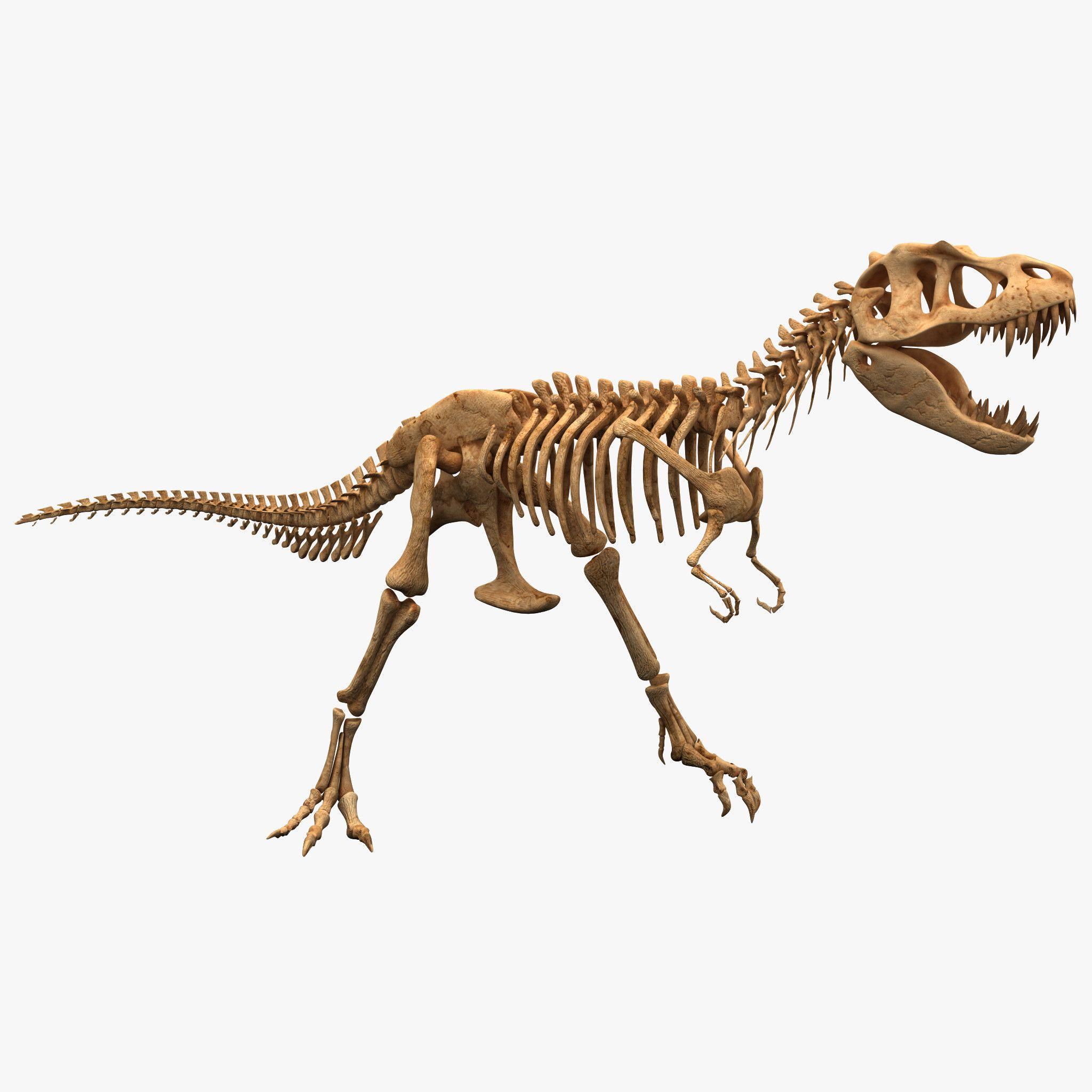 Картинки скелетов динозавров с названиями