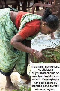 Toplumdan topluluğa dönüş: Hindistan'ın Gizemi - Her Geçen Gün Büyüyen Ormanlaştırma Projesi