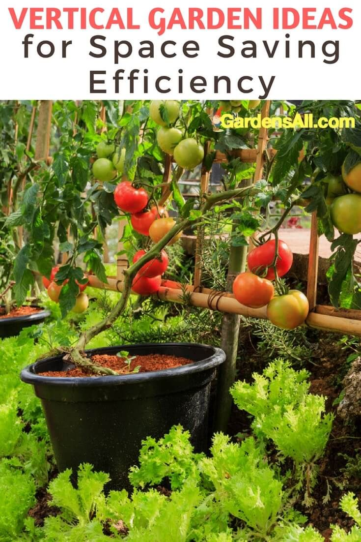 A Vegetable Garden for All is a self-instruction manual in family