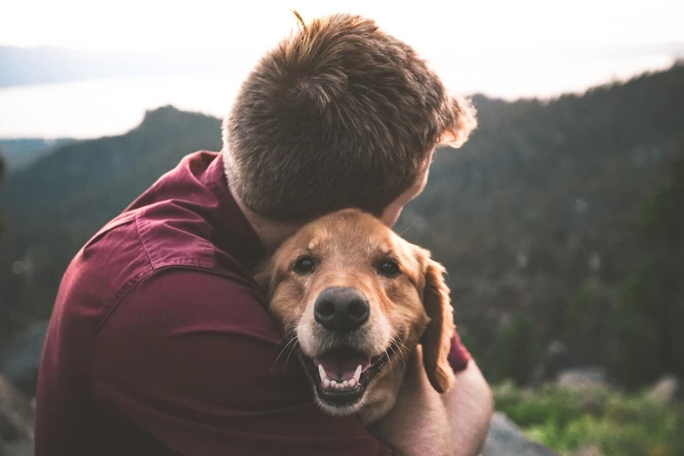 Do Dogs Like Hugs? Dogs, Meds for dogs, Dog breeder