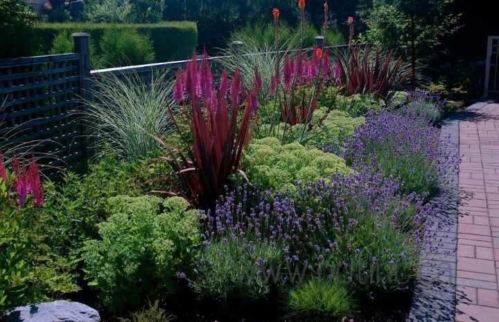Sedum lavender miscanthus morning light knifofia the for Hearty ornamental grasses