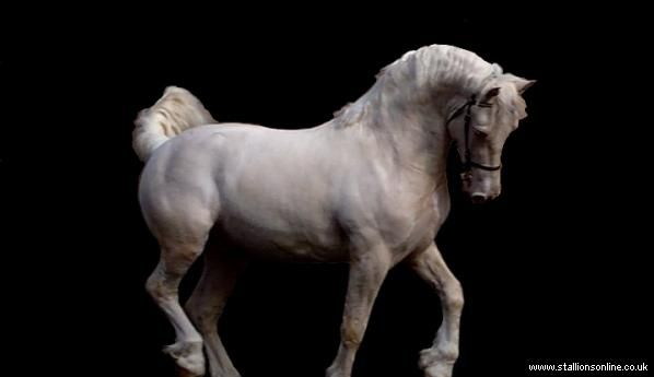 Draghi Royal Phantom - Stud Card. Stallions Online. Stallions at stud. Sec. D