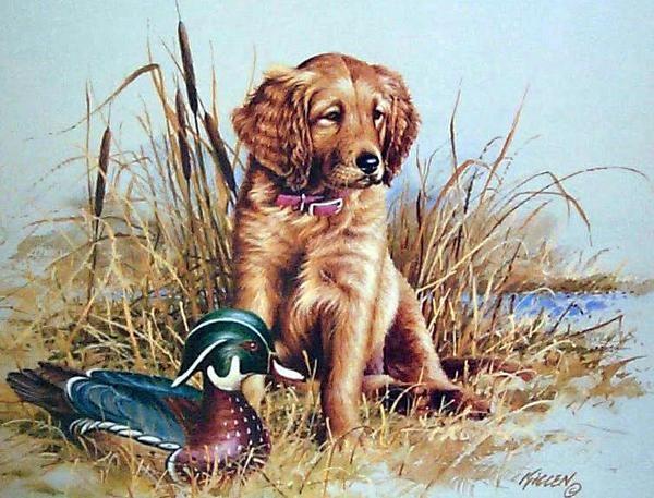 Great Beginnings Golden Retriever Puppy By Jim Killen Dog