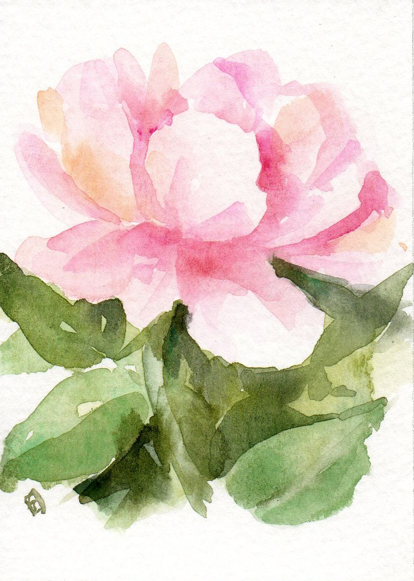Miniature De Rose Aquarelle Originale Roseaceo Rosepainting