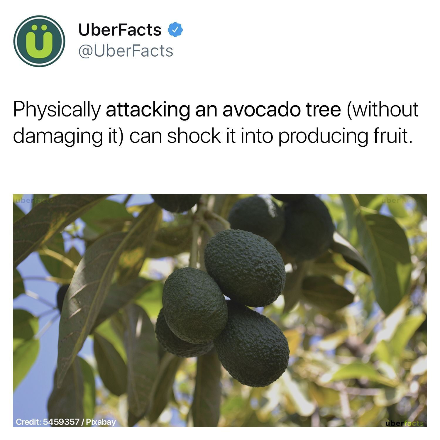 In Case You You Know Need Your Avocado Tree To Step Its Game Up Uber Facts Wtf Fun Facts Fun Facts