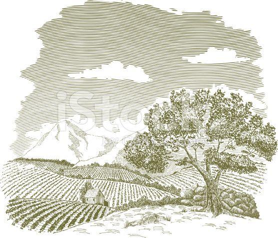 Mountain Farm Field Drawing royalty-free stock vector art