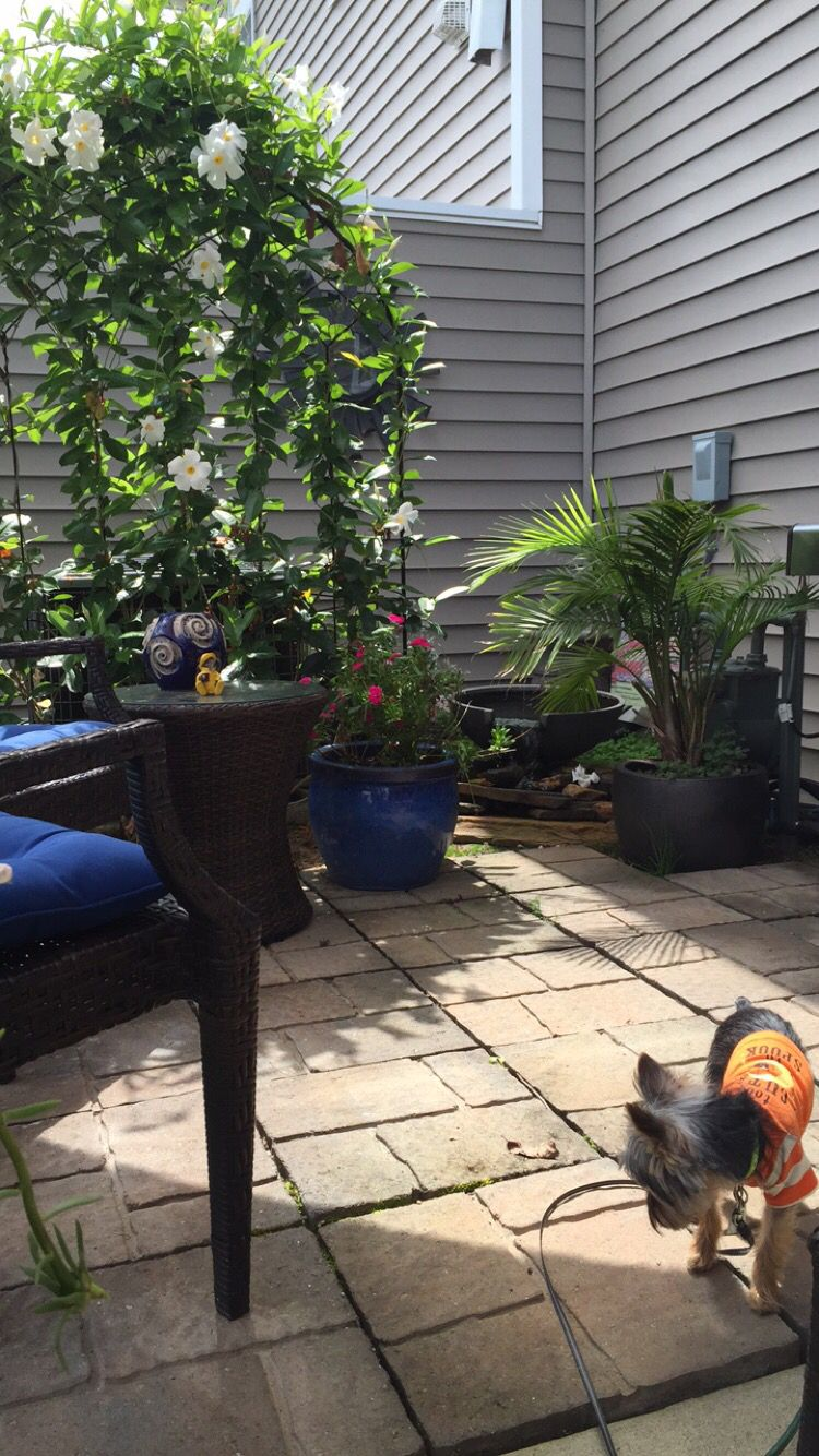 Pin by Regina Payne on My Patio Life (With images)   Patio ...