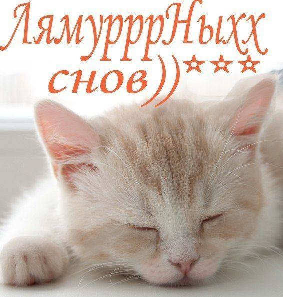 Пожелания с картинками споки ноки, красивые открытки