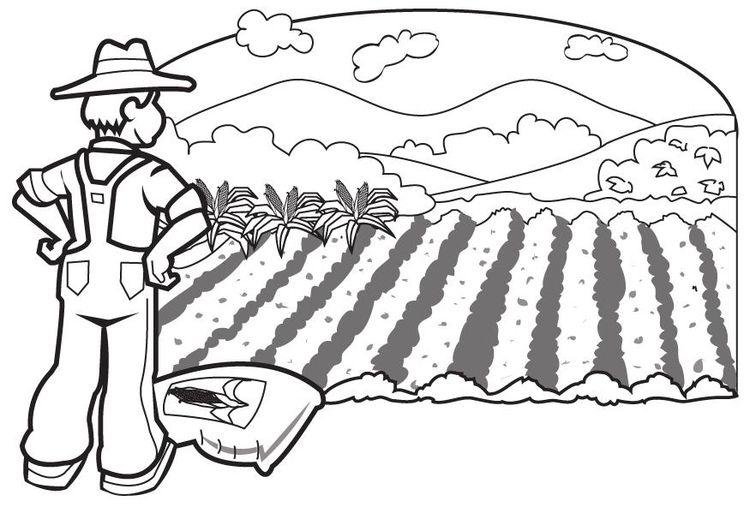 Campo de trigo para colorear