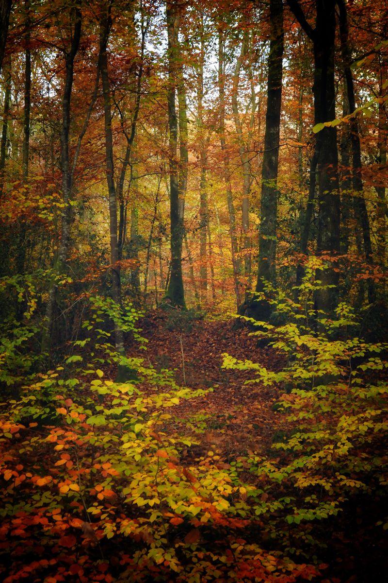 Broc liande couleurs d 39 automne chemin nature sous bois for ts champions animaux paysage - Paysage d automne dessin ...