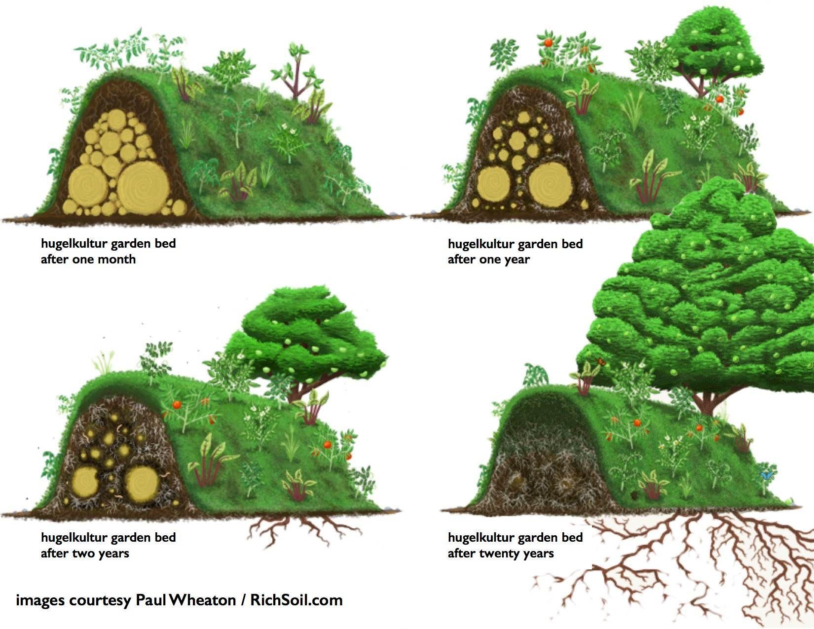 Garden bed with trees  Trees on hugel beds hugelkultur forum at permies  Gardening ideas