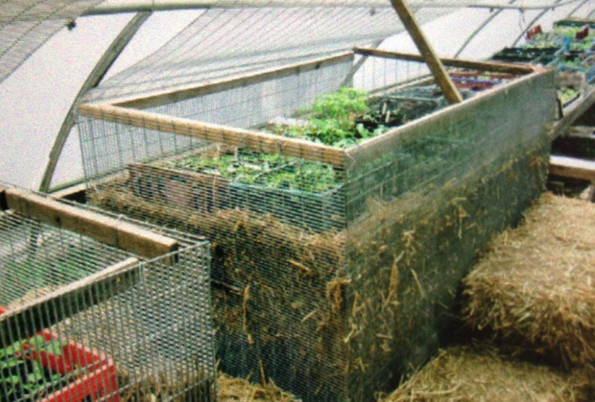 81a65b6a9475f65346569ad0a293ff33 - What Is A Hot Bed Gardening