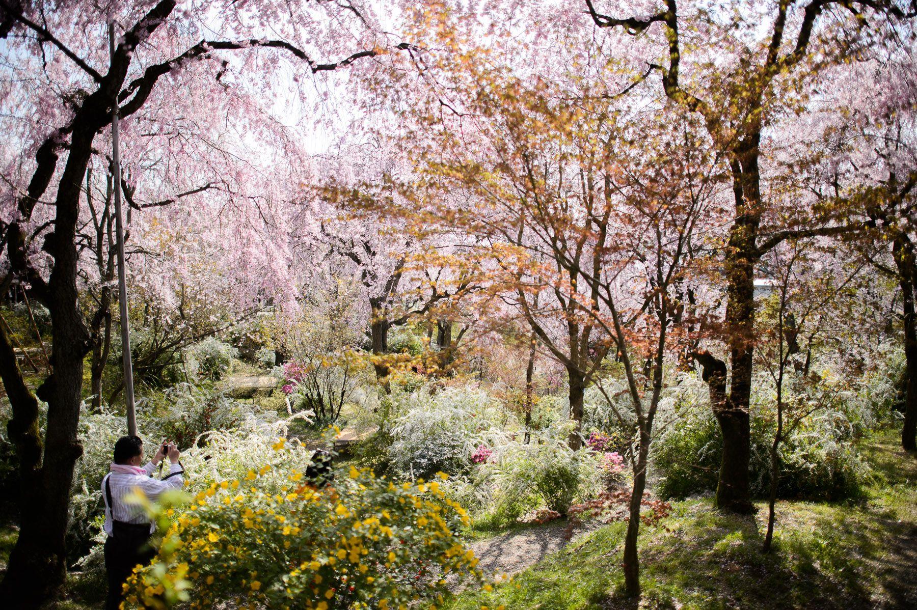Kyoto S Amazing Haradanien Garden Part 1 With Images Japanese Garden Garden Kyoto