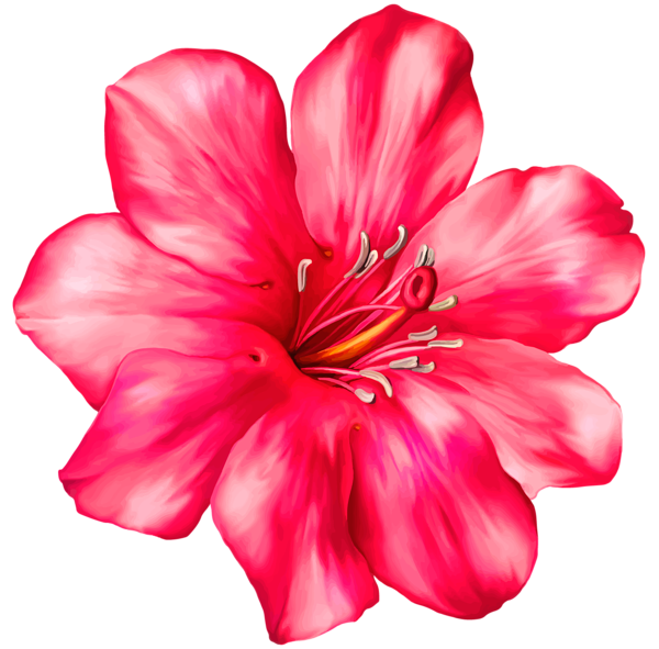 Pin on ED flowers