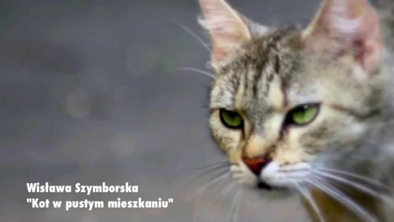 Jolanta Wolters Czyta Kot W Pustym Mieszkaniu Wisława