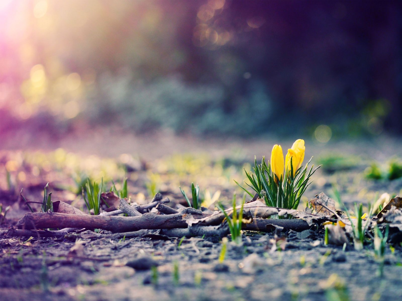 undefined Spring Images Wallpapers (32 Wallpapers) | Adorable Wallpapers
