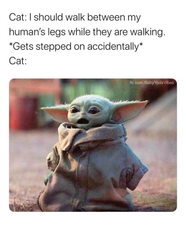 Sat Caturday 30 Photos Yoda Meme Yoda Funny Star Wars Memes