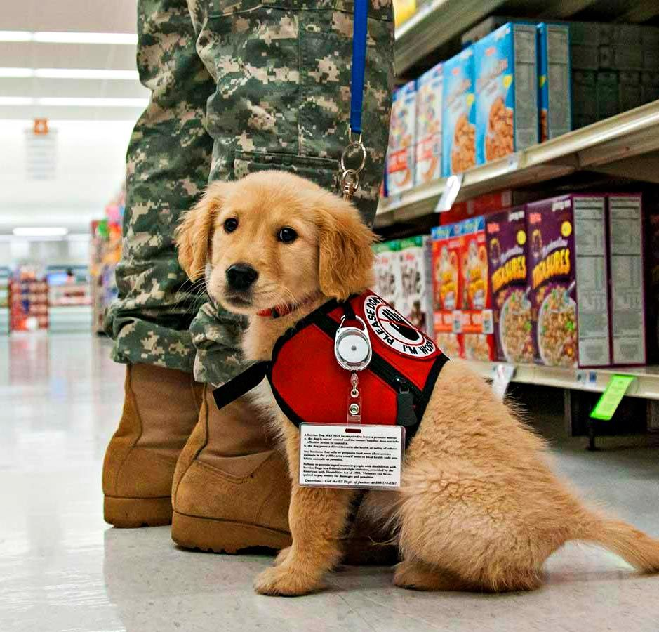 50 Creative Ways To Make A Difference Puppies Retriever Puppy