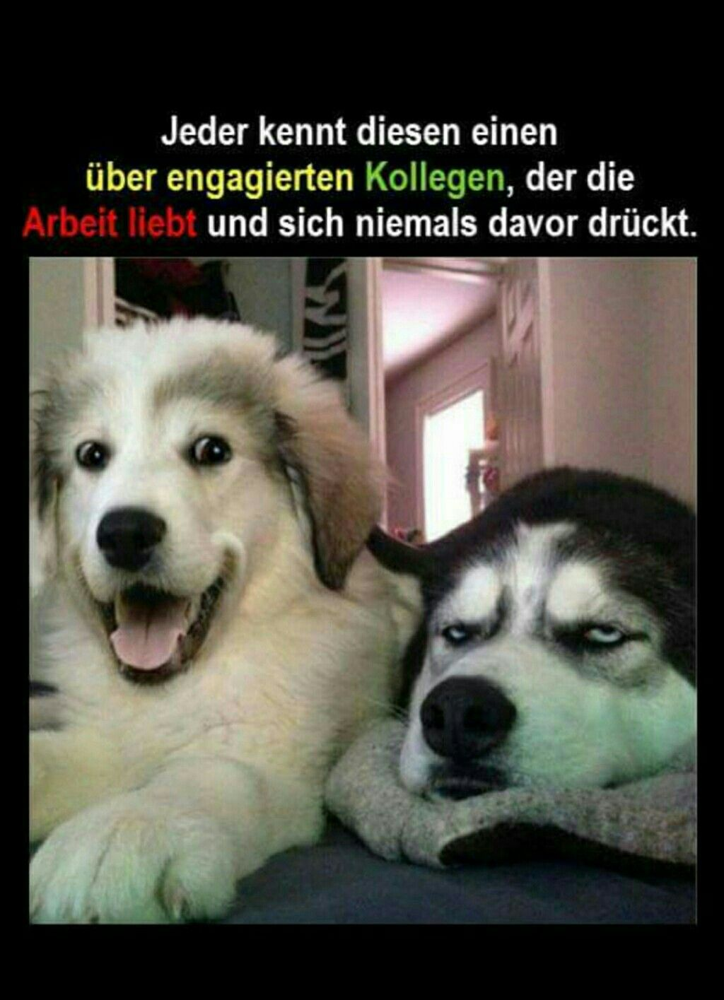 Hunde Bilder Witzig
