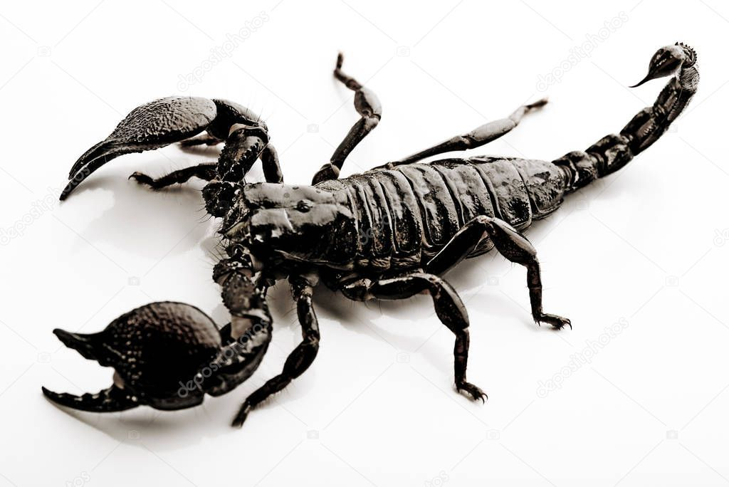 Black Scorpion Egzotic Animal Bright Theme Stock Photo Sponsored Egzotic Animal Black Scorpion Ad Scorpion Animals Stock Photos