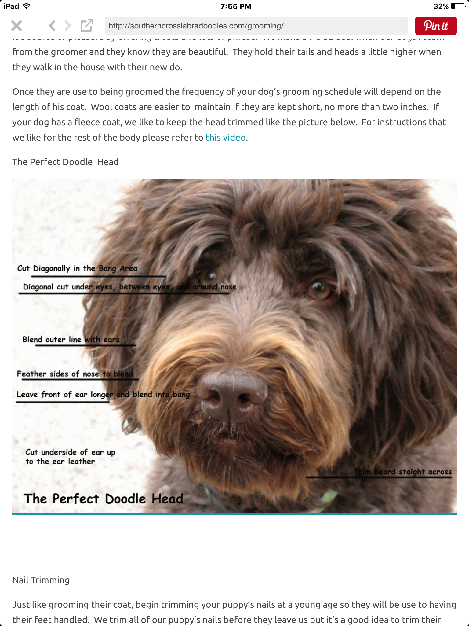 Pin By Sandy Tindall On Doodles Goldendoodle Grooming Labradoodle Grooming Dog Grooming Styles