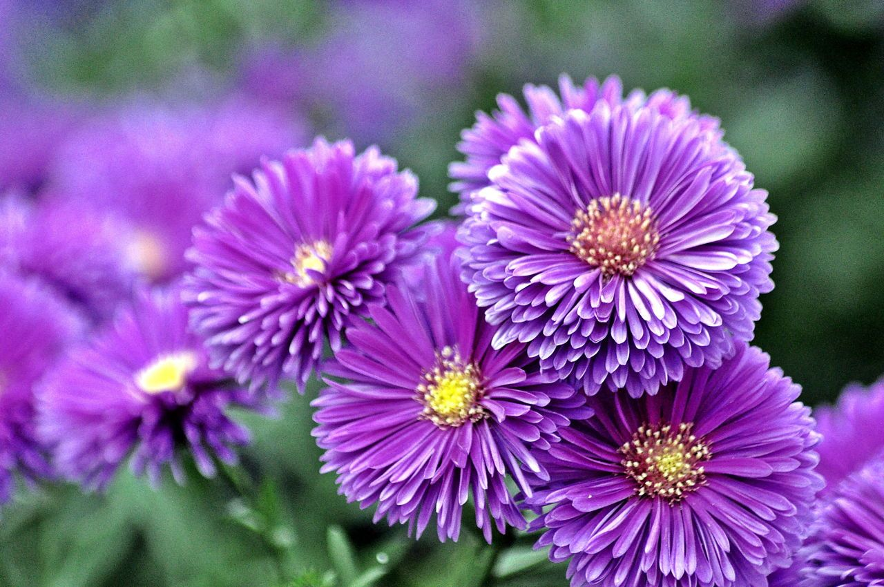 Purple Flower Names Enlisted With a Beautiful Photo