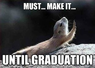 Image result for animal graduation meme