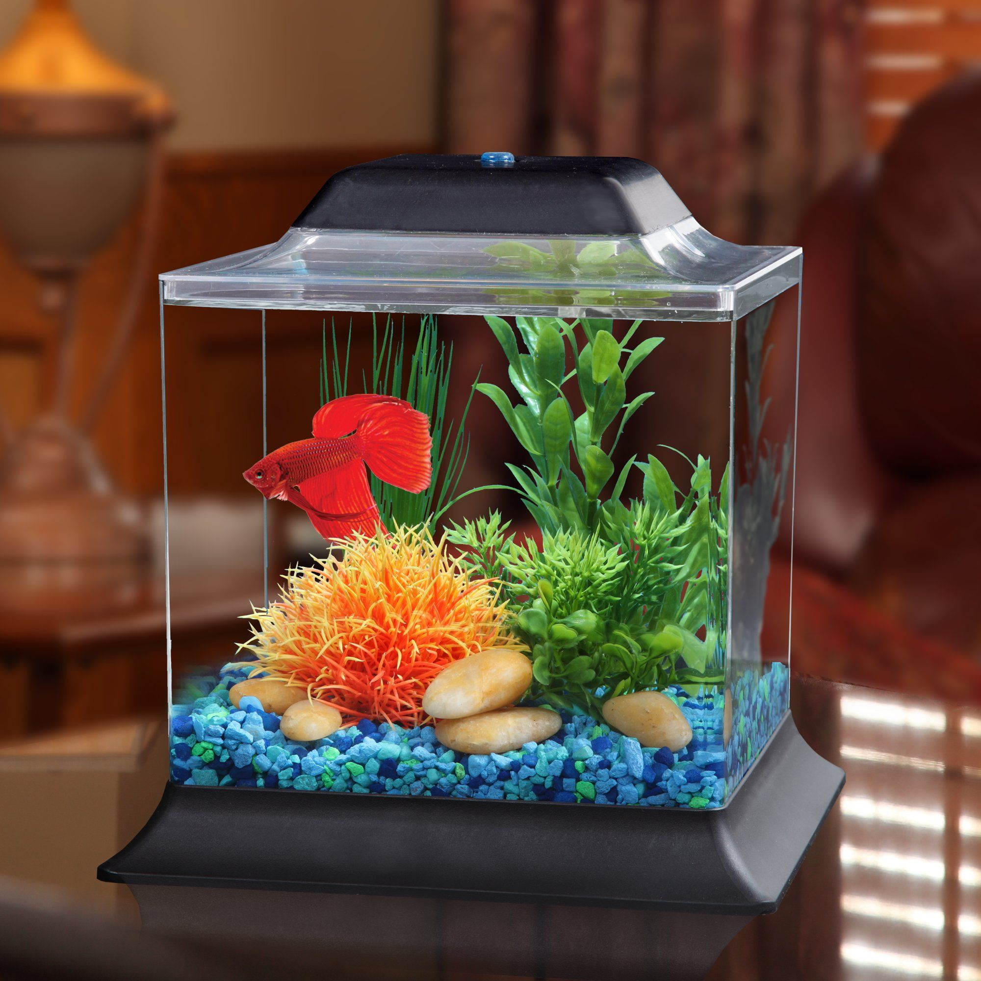 Imagitarium 1 4 Gallon Betta Aquarium Petco Betta Aquarium Betta Fish Tank Small Fish Tanks