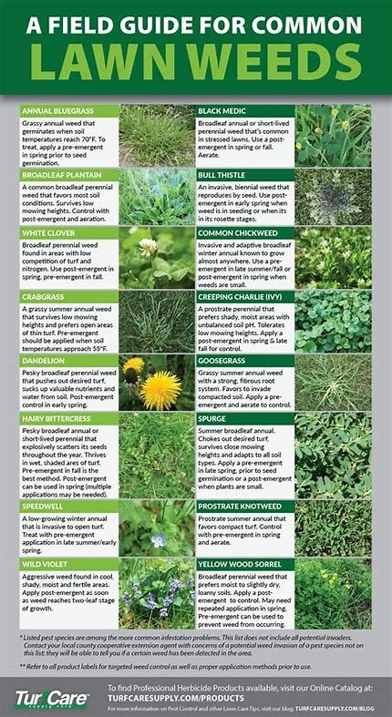 Image result for weed identification chart also friend or foe rh pinterest
