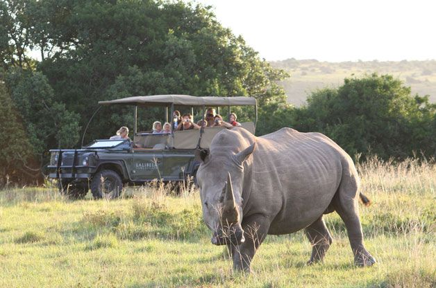 Unique in the Eastern Cape, Lalibela Game Reserve has no public roads running through its property. Home to the Big 5, all of the animals, including the predators, are free roaming throughout the entire reserve... See more: http://www.milesforstyle.com/c64/Lalibela.aspx