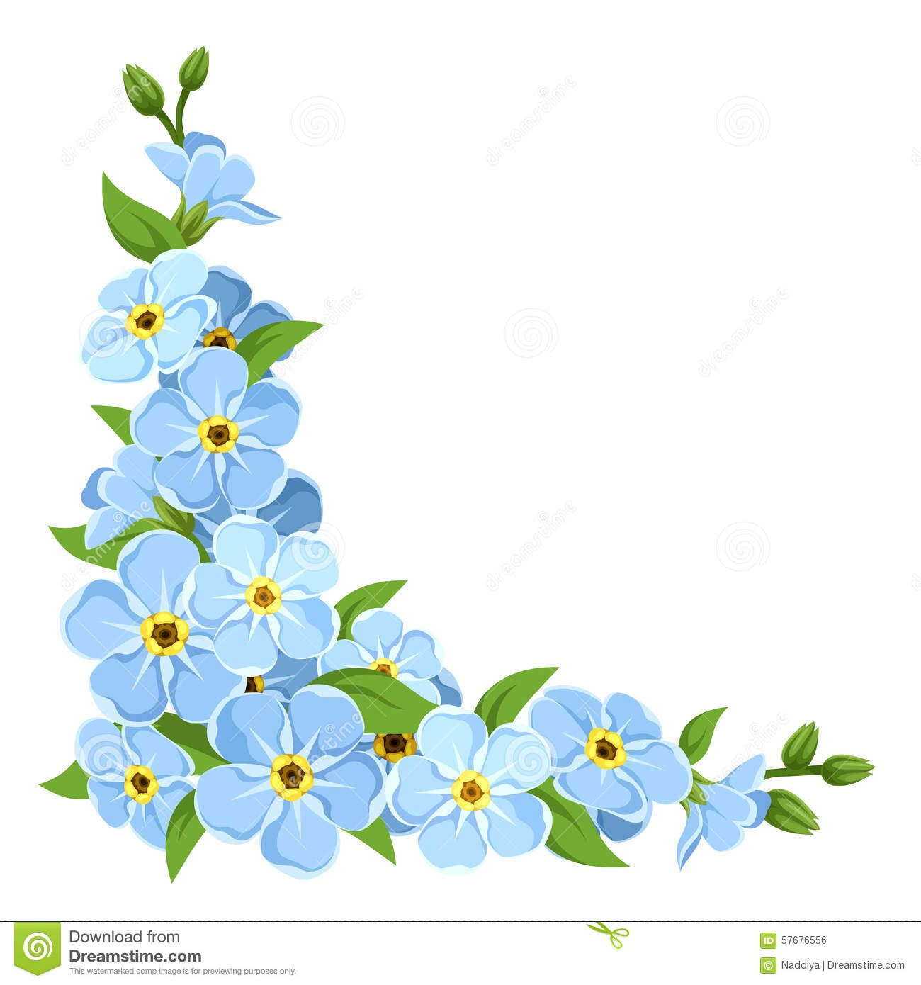 Forget Me Not Flower Corner Isolated On White Stock Photo Image