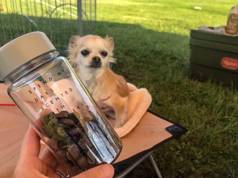 犬とのキャンプを100 楽しむために たくさんの失敗から学んだ注意点を伝授します 犬 キャンプ キャンプ 犬