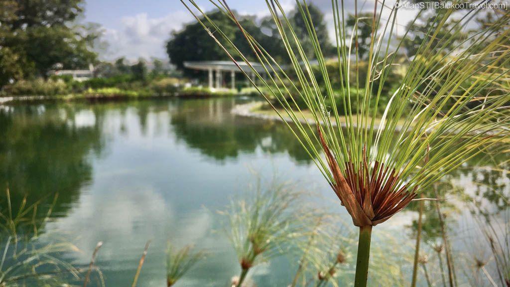 Jurong Lake Gardens Jan 2020 In 2020 With Images Lake Garden