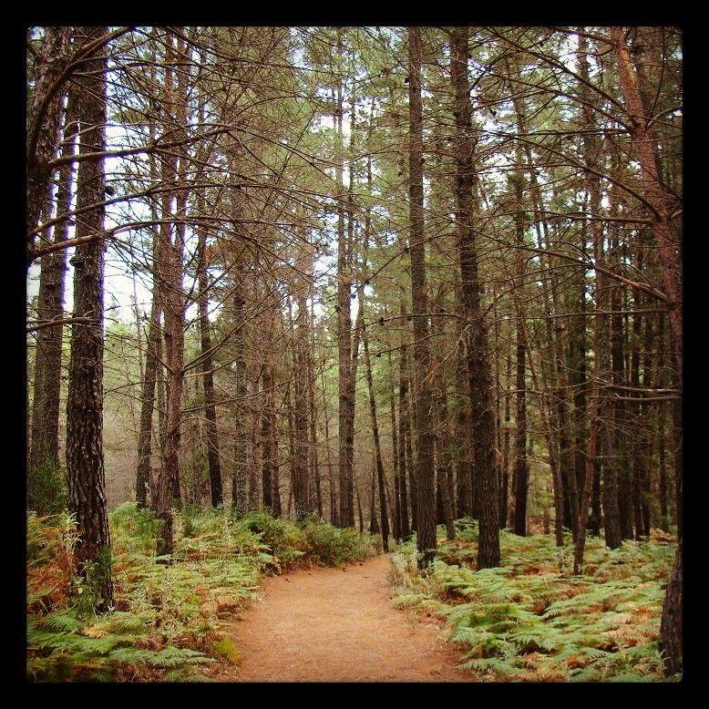 Recordando otros Otoños... Remembering other autumns... #Reminiscing #Recordando #naturaleza #nature #senderismo #trekking