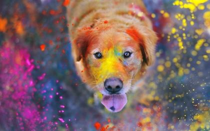 Animals Dogs Bokeh Holi Looking Up Paint Splatter 2560x1600 Wallpaper High Quality Wallpapers High Definition Wallpaper Colorful Dog Dog Photography Giant Dogs