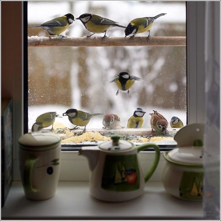 Bird Feeder Outside Window With The Added Perch Above It What A