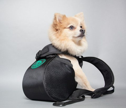 Dog Backpacks / Carriers - Ruffit - 1 | For the Fur Kids | Pinterest