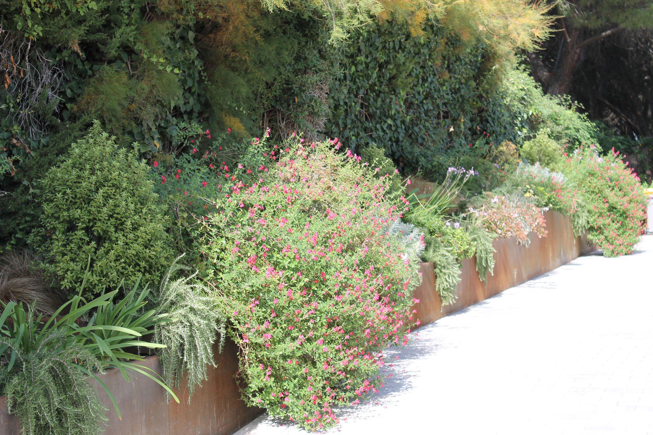 Jard n mediterraneo con jardineras de acero corten con - Jardineras acero corten ...