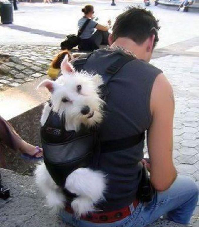 sac de transport pour chien jack russel recherche google costumes pour chien pinterest. Black Bedroom Furniture Sets. Home Design Ideas