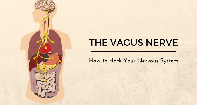 26+ What does the vagus nerve do trends