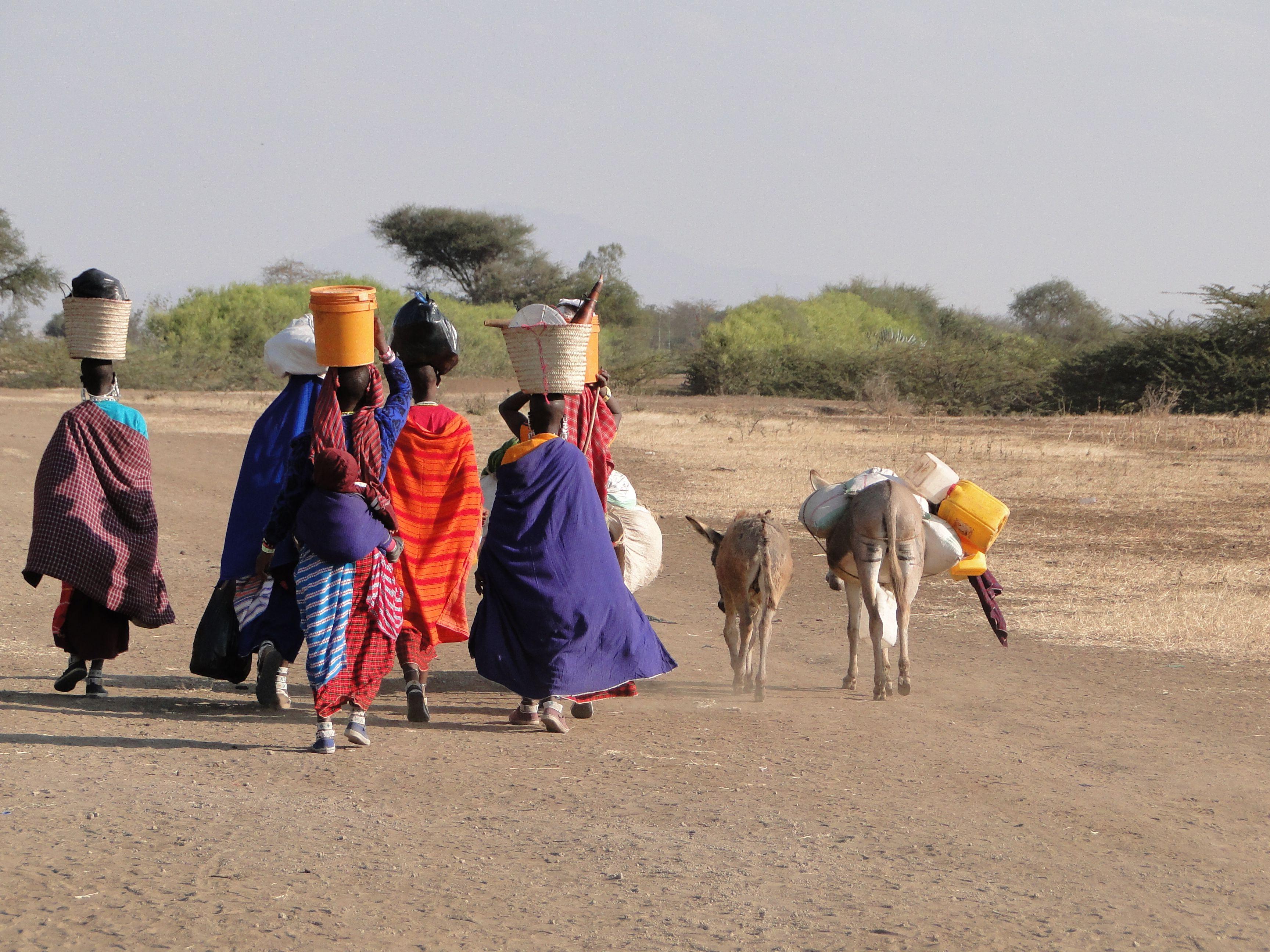 Masai Women Walking Home In Arusha Tanzania Africa