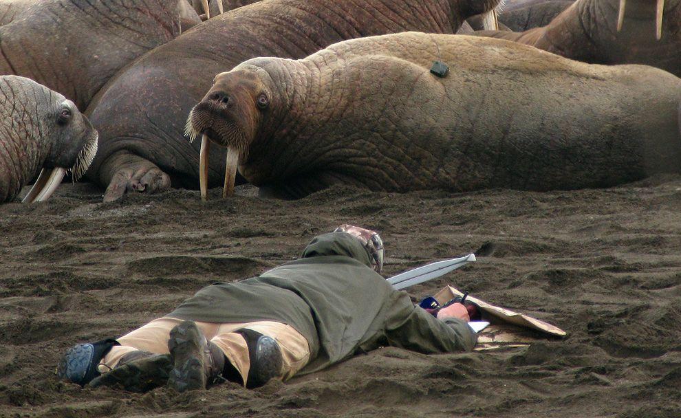 Animals in the news Wildlife biologist, Animals, Animal