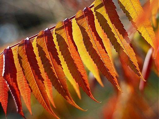 klaura / jeseň 1
